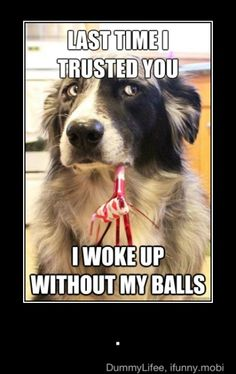 Funny Dog Photo: Doggie trust issues.   ...........click here to find out more     http://googydog.com