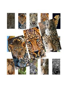 Cheetahs 1x2inch Domino Images Digital Collage by LisaChristines, $1.50