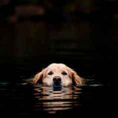 sometimes it's all about keeping your head above water!!