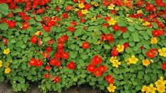 Herbs, Plants, Gardening, Herb, Lawn And Garden, Plant, Spice, Planting, Yard Landscaping