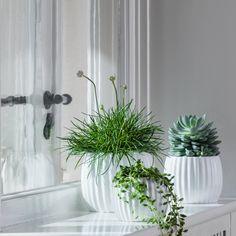 Billedresultat for pynte sinnerup Decor, Window Ledge Decor, Window Decor, Nordic Interior, Ledge Decor, Plant Decor Indoor, Plant Decor, Indoor Plants, Flower Vases