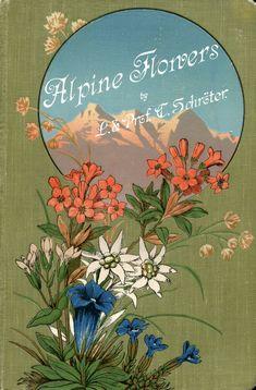 'Coloured vade-mecum to the Alpine flora' by L. Schröter and C. Schröter. A. Raustein, Zurich, 191?