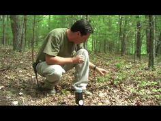 Wilderness Survival - Edible Plants & Edibility Test