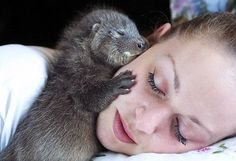 A Baby Otter Sleeping And Hugging Woman's Face Photo Otters Cute, Baby Otters, Pet Vet, Pet Dogs, Wildlife Photography, Animal Photography, Cute Baby Animals, Funny Animals, Wild Animals