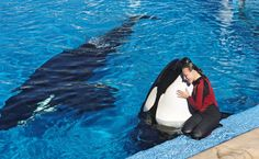 Dawn Brancheau, a trainer at SeaWorld Adventure Park, is shown performing in Brancheau was killed in an accident with an orca at the SeaWorld Shamu Stadium in Orlando, Fla. Orcas In Captivity, World Discovery, Seaworld Orlando, Killer Whales, Sea World, Dolphins, Animals Beautiful, Ocean, Dream Job