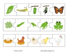 Life Cycles Puzzles and Posters {9 LIFE CYCLES!} by TeachingResourceResort | Teachers Pay Teachers Life Cycles, Ladybug, Puzzles, Kids Rugs, Posters, Activities, Puzzle, Kid Friendly Rugs, Poster