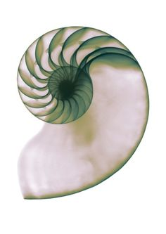 X-ray of a shell