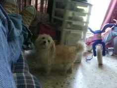 Luniiis (†) vivioó 12 años con nosotros ,se fue en el 2010 ♥