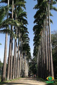 Jardim Botânico: Uma das mais belas e bem preservadas áreas verdes da cidade, é um exemplo da diversidade da flora brasileira e estrangeira!