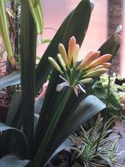 植物_1-ch184658 | 写真共有 - gooブログ「フォトチャンネル」 070312ワイヤープランツ004_1
