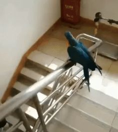 Parrot goes down on the rails [GIF] Funny Birds, Cute Birds, Cute Funny Animals, Cute Baby Animals, Animals And Pets, Funny Animal Videos, Funny Animal Pictures, Bird Pictures, Hilarious Pictures