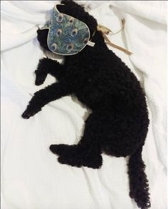 """Limited Edition Eye Mask added by @fredesblog """"Me (and Winston) today"""" www.fredesblog.dk"""