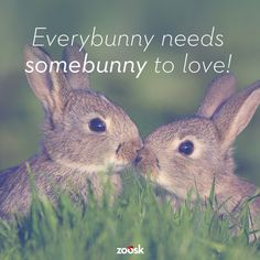 We can help you find your bunny! Happy Easter!