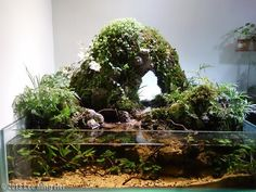 @2013 Lee Ming Hei 2013 AGA Aquascaping Contest - Entry #531 - http://showcase.aquatic-gardeners.org/2013/show531.html