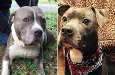Dogs Left To Die In Empty House Still Wag Their Tails