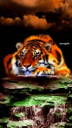 The perfect Tiger Water Animated GIF for your conversation. Discover and Share the best GIFs on Tenor. Tiger Images, Tiger Pictures, Big Cats Art, Cat Art, Animals And Pets, Funny Animals, Cute Animals, Beautiful Cats, Animals Beautiful