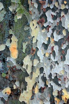 Plane Bark, Autumn, St Stephens | Flickr - Photo Sharing!