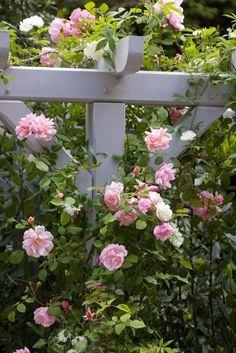 Planera din trädgård | Blomsterlandet.se