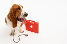 April is Pet First Aid Awareness Month. Do you know how to care for an injured pet until you can get it to your veterinarian or emergency veterinary hospital? Do you have the numbers for your veterinarian, an emergency veterinarian and a pet poison hotline stored in your phone? If the answer is no, please take a minute today to do this simple task. It could save your pet's life!
