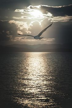 Birds In The Sky, Birds In Flight, Sunset Photography, Landscape Photography, Beautiful Sunset, Beautiful Images, Am Meer, Nature Pictures, Belle Photo