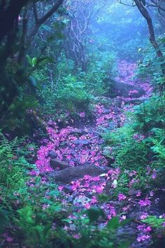 Path into the Mist ... paved with fallen petals from a mountain Rhododendron tunnel. Found many places in the NC mountains, especially along Blue Ridge Parkway trails, such as at Craggy Gardens and Craggy Pinnacle