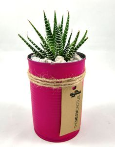DIY Succulent in a Can - Succulent plant with painted recycled can planter