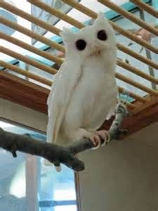 most rarest albino animals - Bing Images