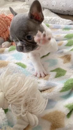 Cute Baby Dogs, Super Cute Puppies, Cute Funny Dogs, Super Cute Animals, Cute Little Animals, Cute Dogs And Puppies, Cute Funny Animals, Cute Cats, Baby Animals Pictures