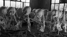 Vintage doll factories handmade thousands of beloved baby dolls, but these pictures show just how creepy they are. Vintage Bizarre, Creepy Vintage, Haunting Photos, Creepy Photos, Creepy Images, Library Of Congress, Vintage Photographs, Vintage Photos, Horror Films