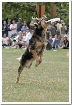 Frisbee dog !!!