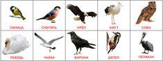 Карточки Домана птицы скачать