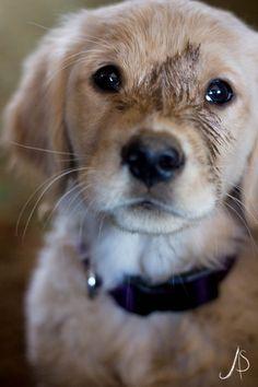 So cute.....looks like Saffron, my son's dog....