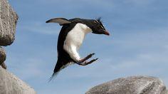 表面上是石頭、鳥蛋、企鵝,其實都是相機…… | Photoblog 攝影札記 - 最新奇、最好玩的攝影資訊及技巧教學