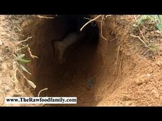 How To Build Your Own Underground Shelter Bunker (Kids Style)