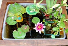 A simple, still-water garden is the single greatest thing you can do to boost the ecology of your neighbourhood.