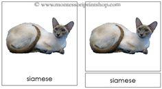 Three Little Kittens: Cat cards