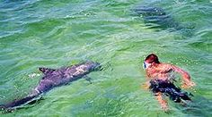Swim With Dolphins on Panama City Beach Florida.  Shell Island Boat Rentals & Tours, Blue Dolphin Tours $49/person to Swim with Bottle-Nose Dolphins & Snorkel