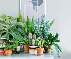 Wide range of indoor plants