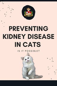 Cat parents, did you know kidney disease affects 1 in 3 cats over the age of 10? Check out our article where we dive deep on how you can support your cats health, special tips, tricks and food you can give your kitty to keep their kidneys healthy. Cool Cat Toys, Cool Cats, Baby Cats, Cats And Kittens, Training A Kitten, Cat Diet, Silly Cats, Sphynx Cat, All About Cats