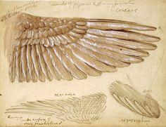 Wan and Zhongyuan's proposal and research on Leonardo da Vinci's Wing Machine (f12arch531project, 2014)