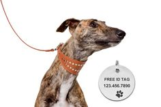Leather Greyhound Dog Collar with Free ID Tag and Leash Set Whippet Lurcher Borzoi Small Medium Large Breeds Black Brown  We include a personalized ID tag with these collars. We cut this tags out of stainless steel and brass and laser engrave them. Please enter your dogs name, phone number and ID tag type at check out.  Handmade studed Greyhound / Wippet dog collar and leash set. Made out of two ply genuine leather. These sets are intended for Whippet Lurcher Borzoi and Greyhounds. All…