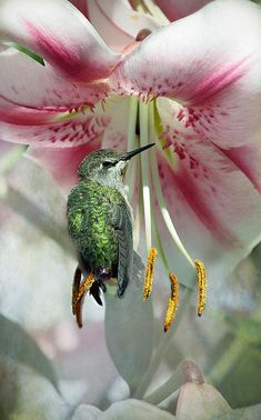 Hummingbird resting on flower - By Lynne Mcclure