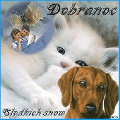 Teddy Bear, Dogs, Pictures, Google, Dog Love, Photos, Pet Dogs, Teddy Bears, Doggies