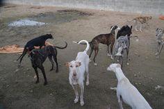 Noticias del blog Scooby Español: Nos fuimos a Cádiz