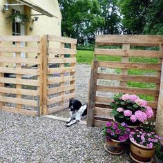 a Pallet Fence that will cost you nothing Repurpose {Pallets} into a {Pretty Fence} for your driveway!Repurpose {Pallets} into a {Pretty Fence} for your driveway! Wood Pallet Fence, Diy Fence, Backyard Fences, Backyard Ideas, Fence Garden, Patio Ideas, Pallet Gate, Garden Pallet, Backyard Privacy
