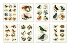 Amazon.com: Cavallini Decorative Stickers Birds, Assorted