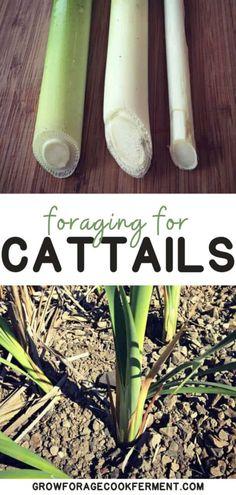 Survival Food, Survival Kits, Refreshing Summer Cocktails, Edible Wild Plants, Urban Chickens, Wild Edibles, Herbal Remedies, Natural Remedies, Chickens Backyard