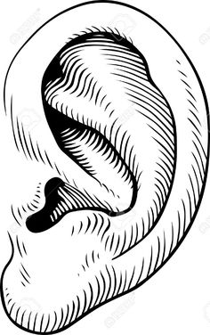 Human ears clipart black and white - photo#4