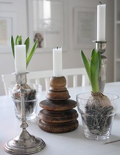 Candles and hyacinths