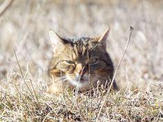Cat 2, Big Cats, Animals, Animais, Animales, Animaux, Animal, Dieren